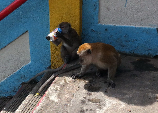 Macacada reunida dando uns tragos
