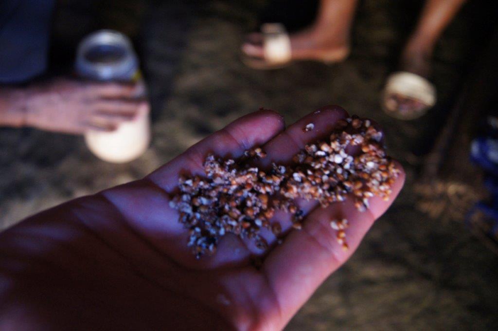Grãos usados na na fabricação da Tjwala